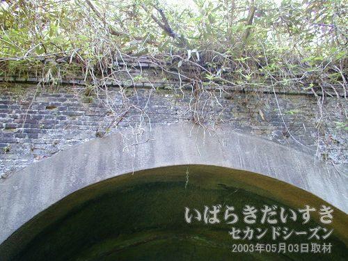 トンネル上部には樹が浸食<br>トンネル上部に樹が浸食しています。強度が落ちていないか心配です(^^;)。