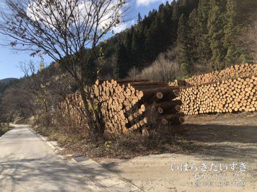 林業的な樹木伐採の現場。