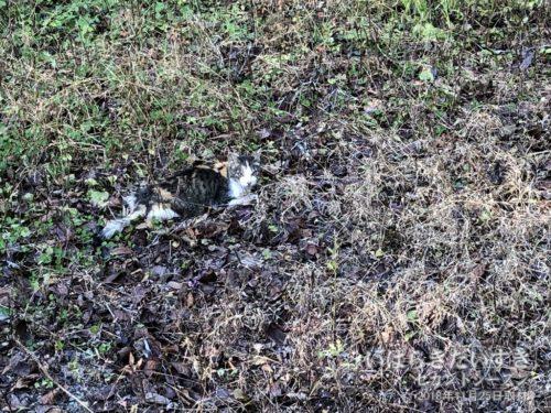 山頂付近に、猫ちゃん発見!?