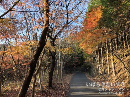 今年(2018)の八溝山の紅葉は、11月下旬ころがピーク。