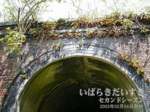 夕筋トンネル上部<br>レンガを割るようにして、木や草が生えてきています。強度が劣化しないか心配。