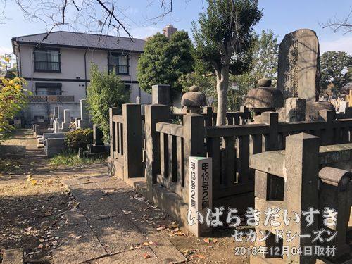第19代横綱 常陸山谷右衛門<br>代横綱らしい、大きな墓石が特徴です。