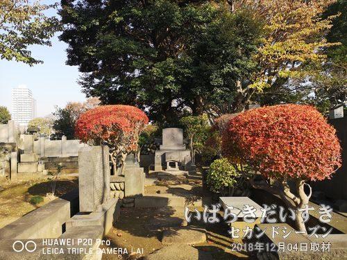 日本画家の巨匠 横山大観<br>東京都台東区に横山大観記念館があります。