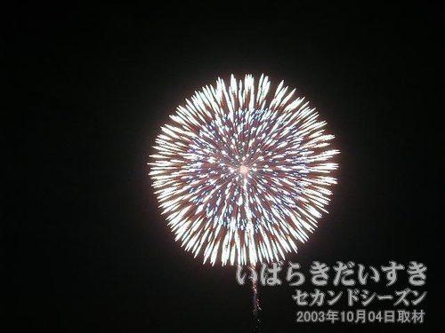 01:昇り竜導付八重芯変化菊<br>川崎火工服部煙火店