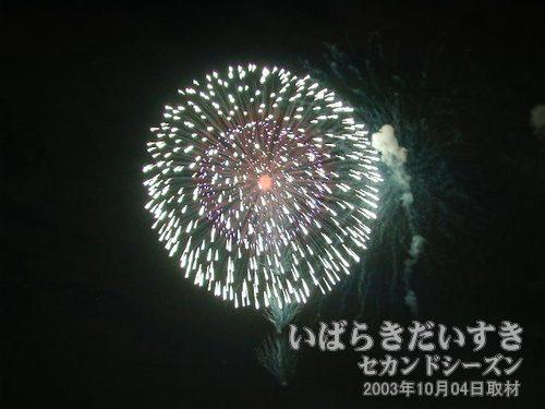 03:昇曲導付八重芯変化菊<br>大洋花火