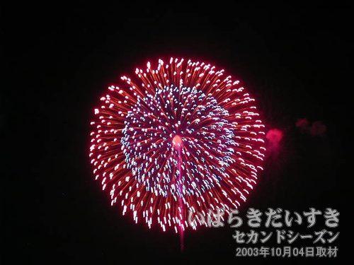 24:昇り小花八重芯変化菊<br>高城煙火店