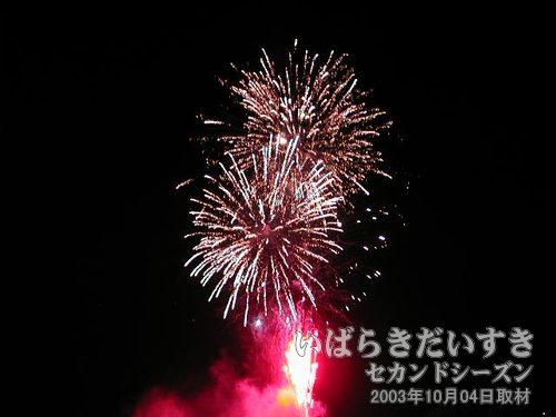 25:ひまわり変化菊<br>茨城火工