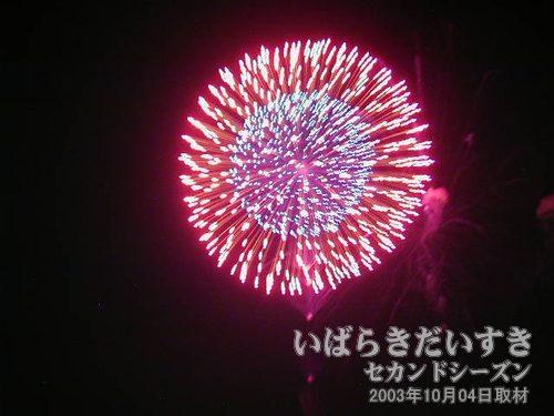 40:昇り雄花三重芯変化菊<br>太陽堂田村煙火店