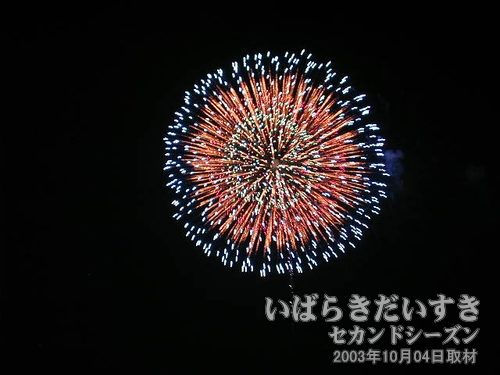 43:昇曲導付八重芯変化牡丹<br>三宅花火店