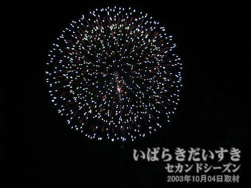 50:昇り曲付三重芯変化菊<br>臼井煙火