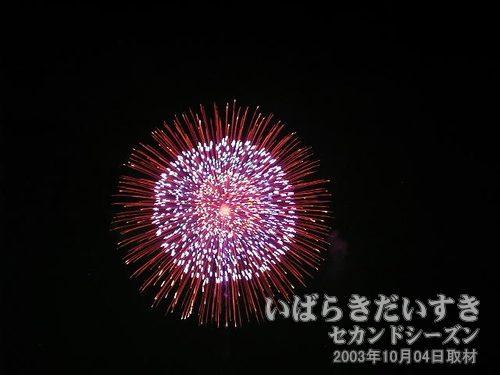 73:昇り木葉付四重芯菊先黄金変化<br>豊橋煙火