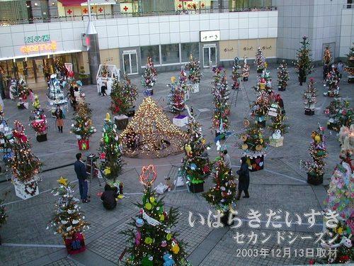 中央広場<br>クリスマスツリーが今年もたくさん(100本?)設置されています(*^^*)。