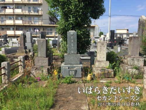 岩波家の墓〔茨城県土浦市都和〕<br>「行けば大きな木があるから分かる」と言われましたが、この墓地、霊園に来るまでにさんざん道に迷いました。