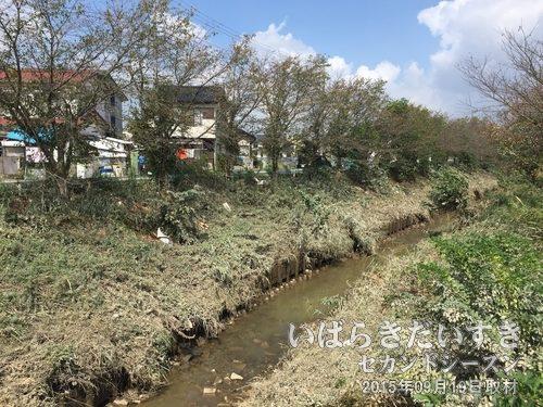 小貝川支流も汚れている<br>小貝川の支流も、氾濫があったようで木々や草が茶色く泥や砂で汚れています。