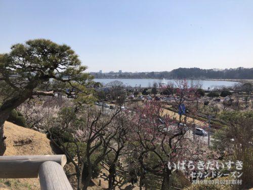 見晴らし広場からは、千波湖が一望できる。