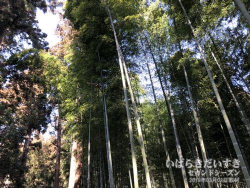 孟宗竹林は、斉昭が弓の材とするため京都から移植したもの。