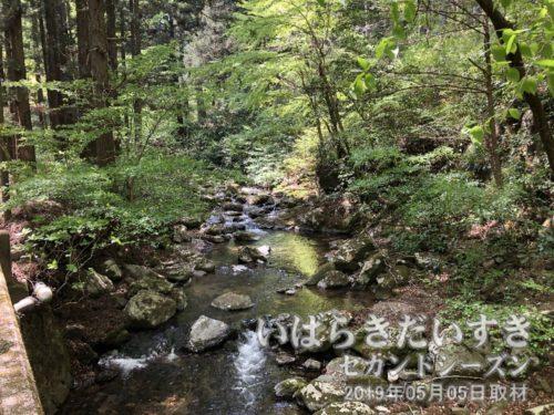 花園川は紅葉スポットです。