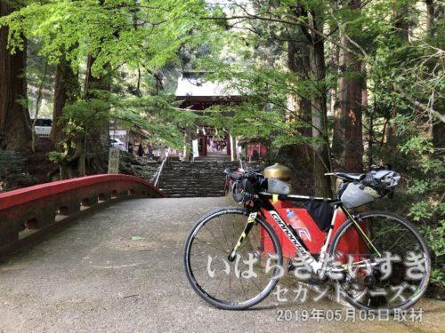 それでは、そろそろ花園神社を後にします。次に来るのは、紅葉の季節でしょうか。