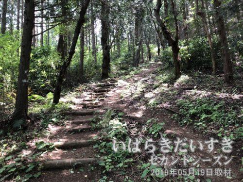 道祖神峠入口からキツイ。勾配のきつさは、なかなか写真では伝わらない。。
