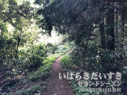 山道がきっちりあるので、道に迷うことはほぼありません。