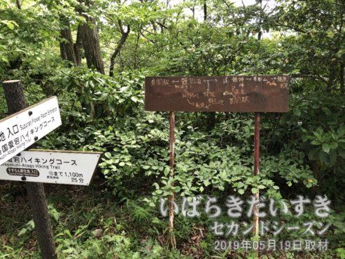 先ほどのT地路を左に進めば難台山山頂。