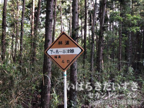 林道「下ヶ鳥~谷津線」。つまり山の中です。