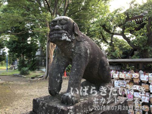 龍ケ崎 八坂神社 狛犬 吽形