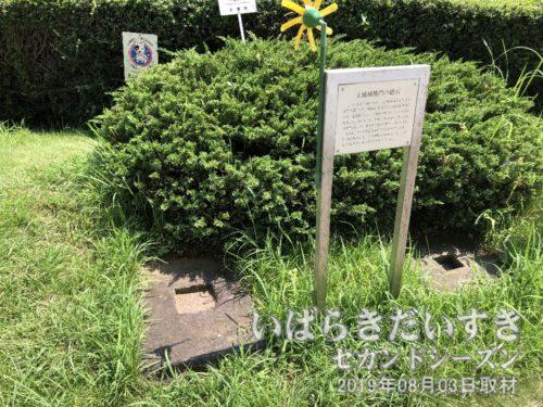 土浦城櫓門の礎石<br>土浦城櫓門の礎石(そせき)。昭和62年(1987)の櫓門解体修理の祭、発見されました。明暦02年(1656)、櫓門建築の祭に使われた、最初の礎石と考えられています。