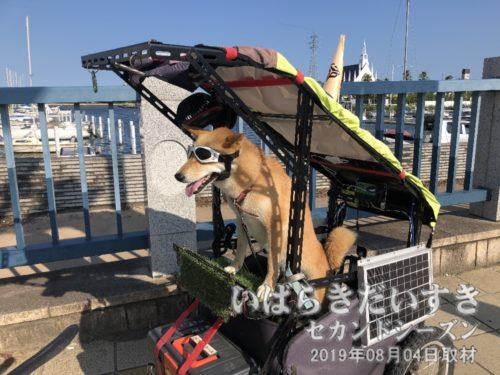 土浦市街地に戻るとき、サングラス犬に出会う。