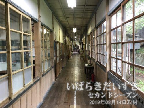 木の廊下も、木のサッシも古い建築だ。