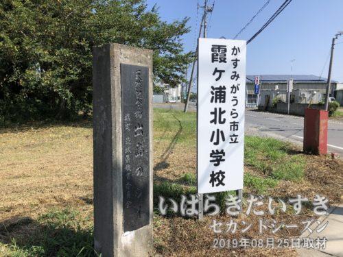 出島のシイ(天然記念物)。〔茨城県かすみがうら市下軽部〕