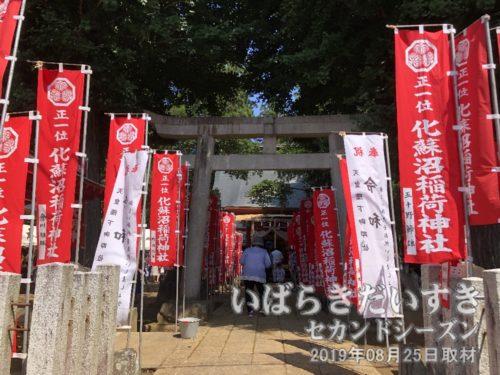 参道鳥居には、化蘇沼稲荷神社の旗が多数。
