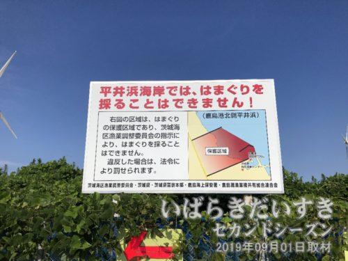 平井海岸で、はまぐりを採ってはいけません。