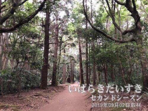 鹿島神宮 県道192号<br>鹿島神宮の敷地を縦断する県道。普段、車の通行はできません。自転車は通れる。要石への近道。
