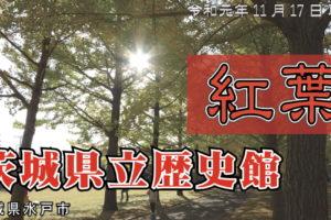茨城県立歴史館 紅葉 2019 / 歴史館いちょうまつり