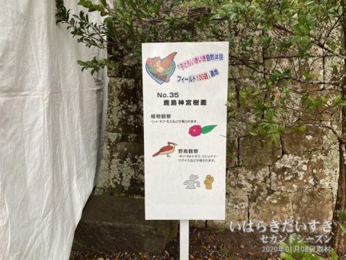 子どもいきいき自然体験フィールド100選<br>No.35 鹿島神宮樹叢
