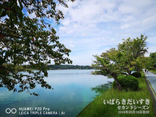 千波湖:湖周はウォーキングトラックになっています。市民の健康を守ります。