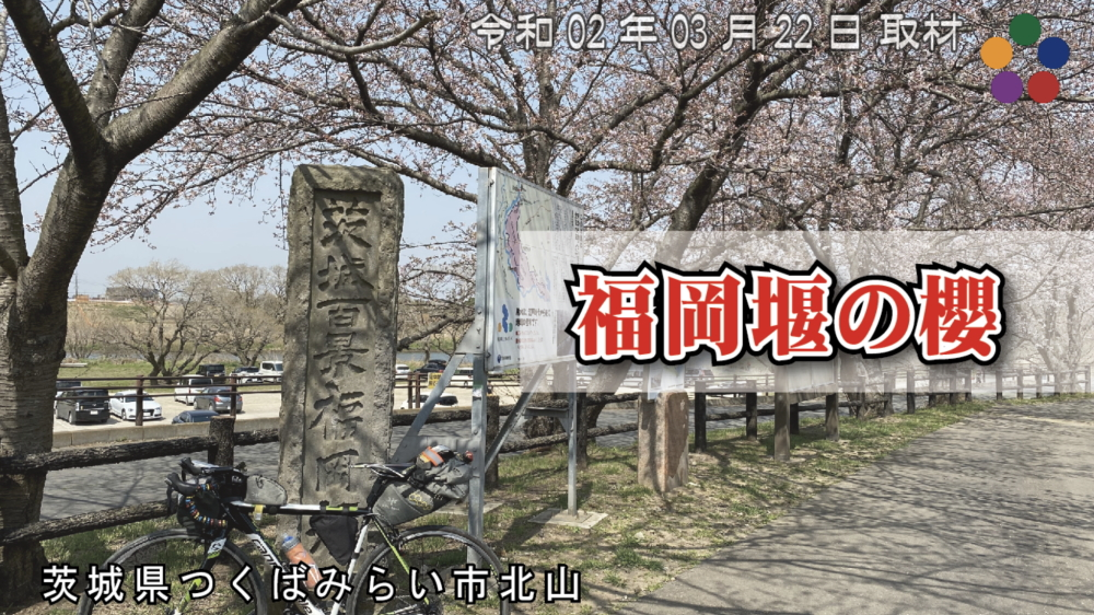 福岡堰の桜 茨城百景 つくばみらい市