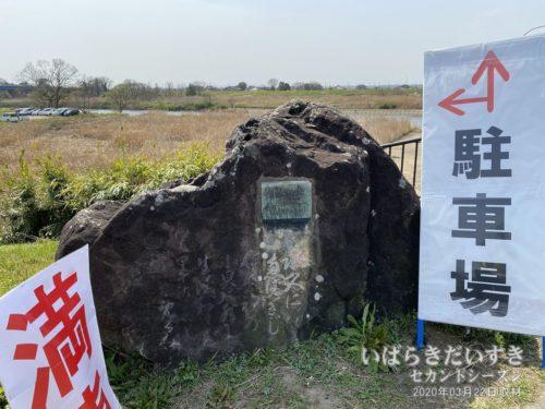 茨城四十五景 福岡堰