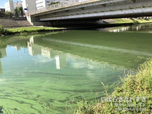 千波湖とつながる桜川。アオコの時期があります。
