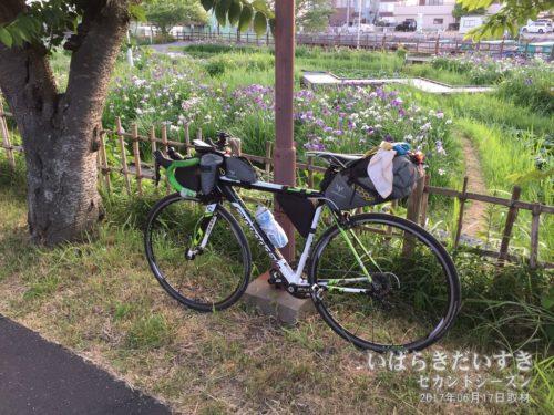 ロードバイクで土浦から潮来に来る。