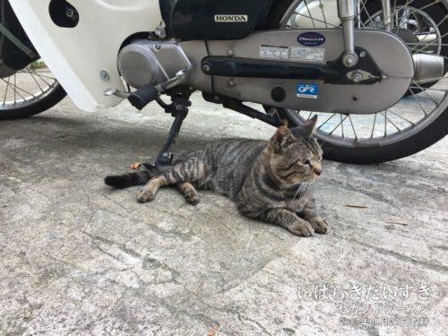 玄関にはネコちゃん。