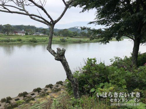 ホテル鮎亭前には、久慈川が流れる。