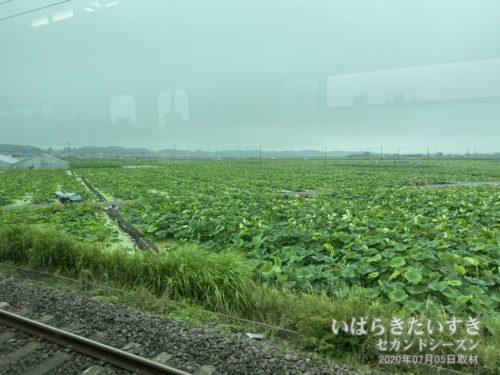 常磐線 土浦市の車窓から蓮田