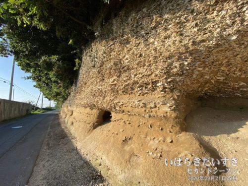 崎浜横穴古墳 / カキの殻の地層
