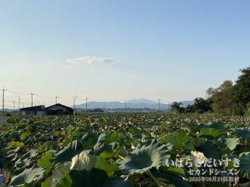 土浦市沖宿から筑波山を望む。