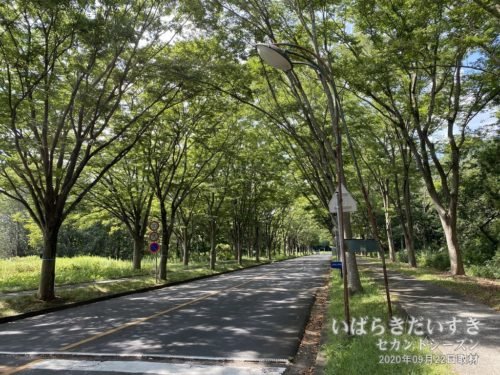 慶應義塾藤沢SFCや東大駒場、阪大豊中Cのような雰囲気。