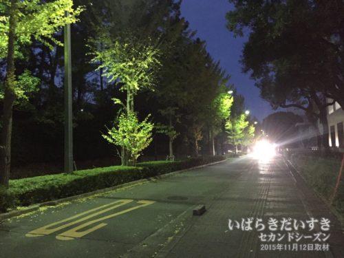大阪大学(阪大) 豊中キャンパス