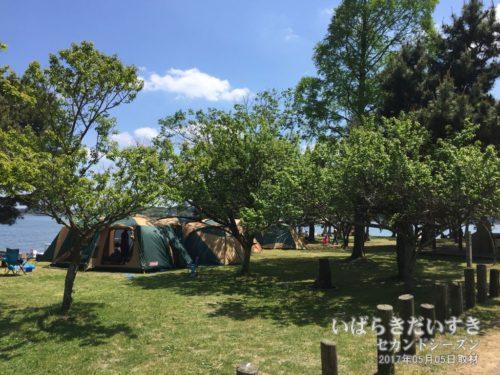 涸沼自然公園キャンプ場