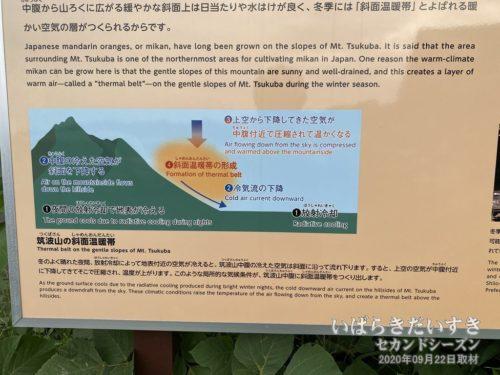 「筑波山の斜面温暖帯」により、暖かくなる。